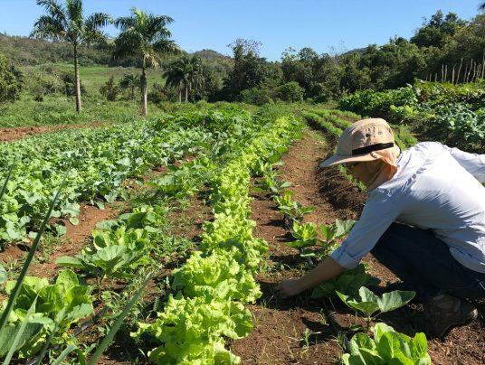 Una decena de jóvenes se forman en agricultura ecológica